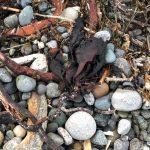 Seaweed bundles